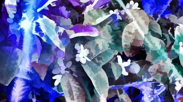 Blue Orange Blossoms