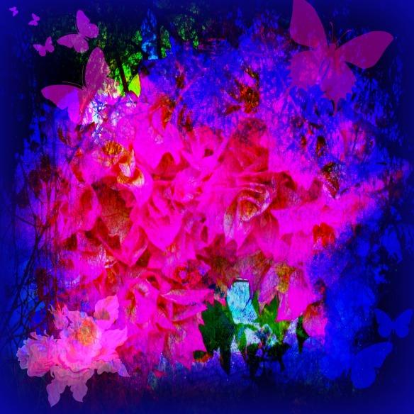 Bougainvillea Butterflies