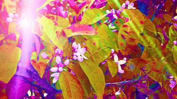 Magic in Orange Blossom