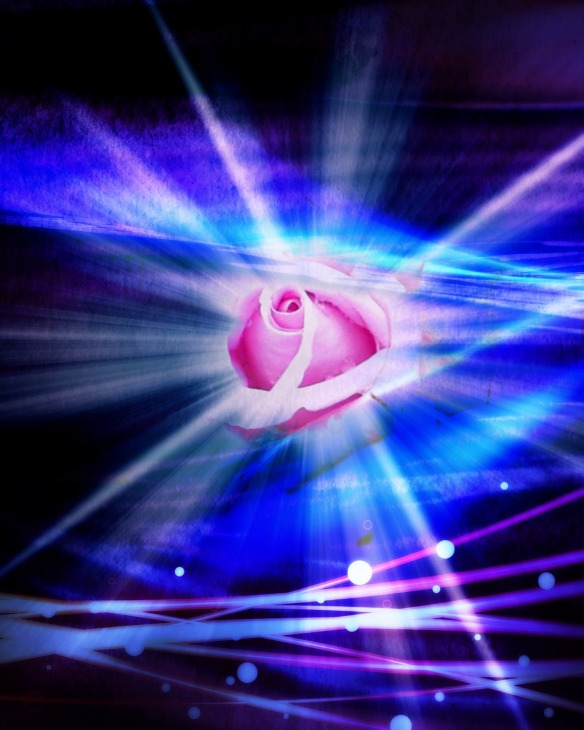 Rose & Love