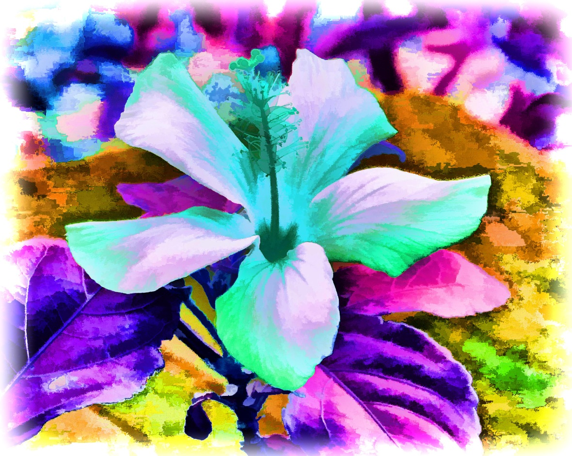 Colours of Hibiscus - 1
