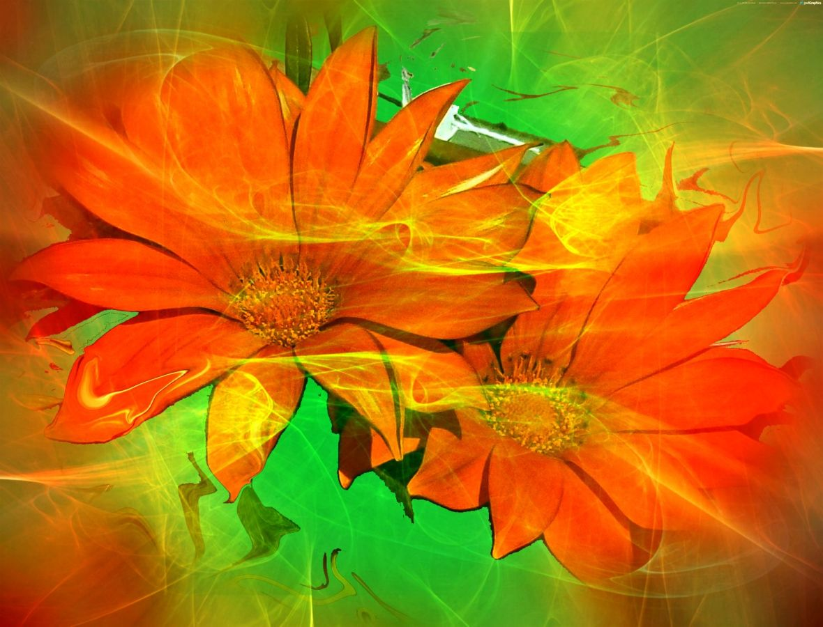 BeFunky_Gazanias,orange.jpg