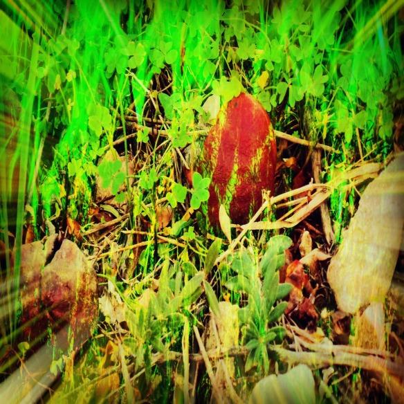 Fairy Foliage