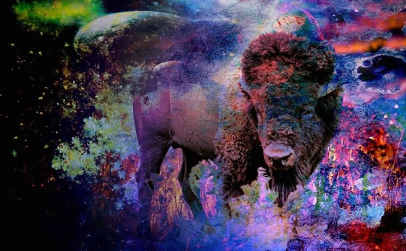 Bison Dreaming
