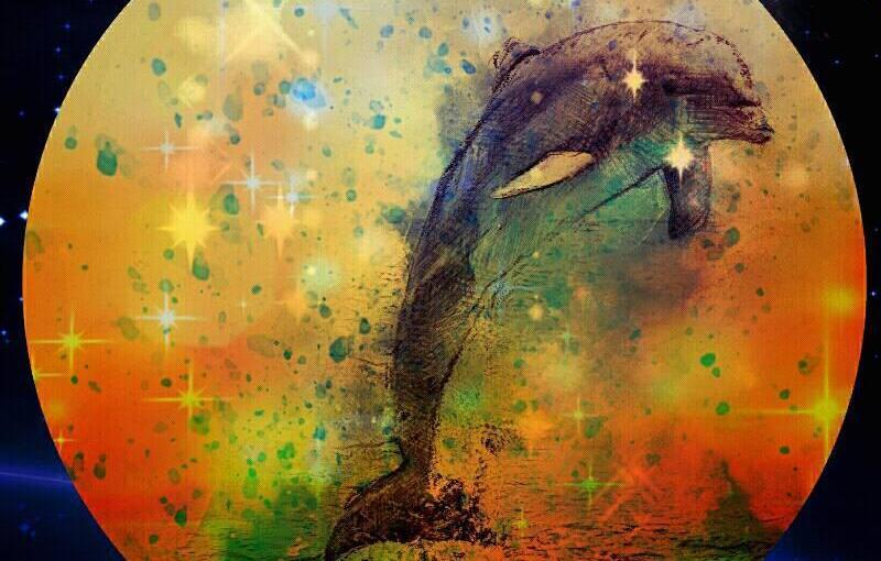 Dolphin Dreamlines