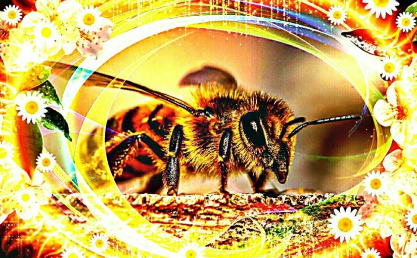 In Praise of Bees!